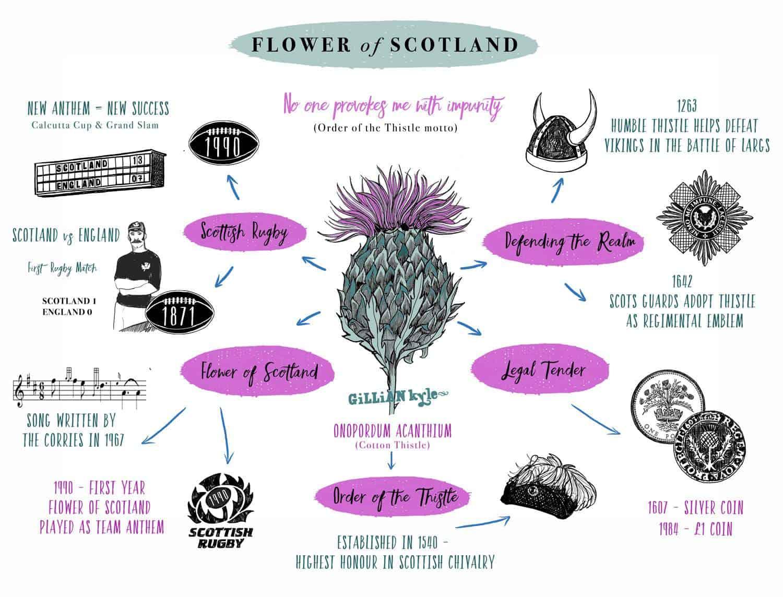 Flower of Scotland Scottish Thistle infographic by Scottish Artists Gillian Kyle