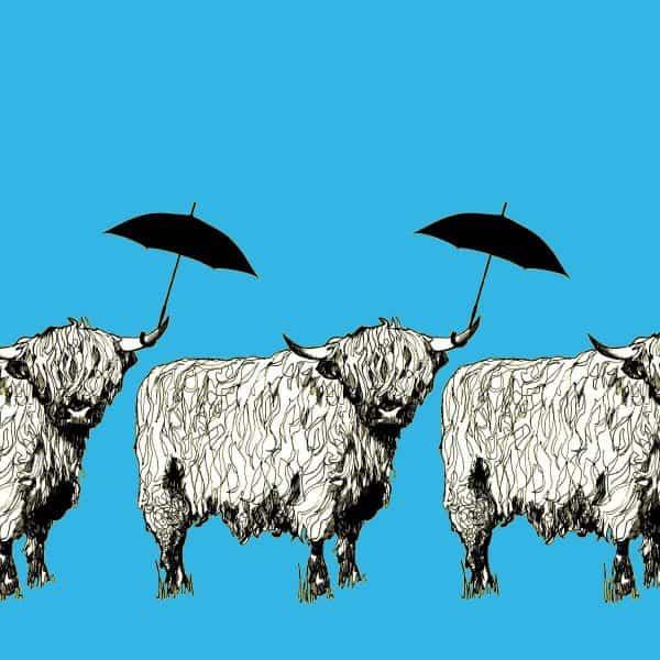 Dougal Highland Cow pattern case in sky blue by designer Gillian Kyle - print detail