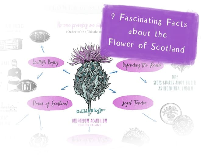 Flower of Scotland blog link